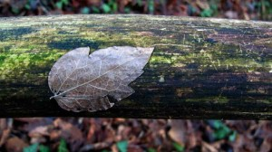 leaf trunk horizontal