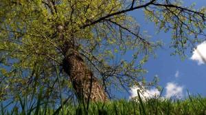 tree sun sky