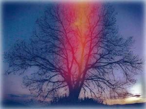 tree copy45kb