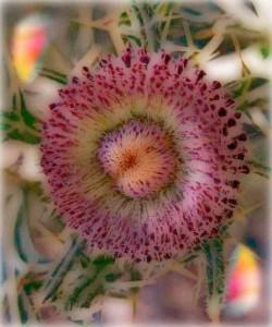 flowermd