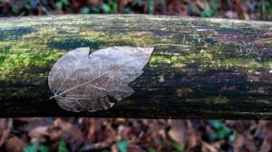 leaf trunk horizontal